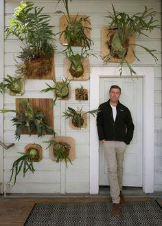 Vertical garden staghorn ferns