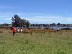 Lake Ngāroto in Te Awamutu New Zealand. I love this lake. learned to waterski here Water Quality, New Zealand, Places Ive Been, The Good Place, Learning, My Love, World, Studying, Teaching