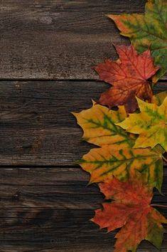 Autumn background by Yulia Furman on Iphone Wallpaper Herbst, Rainy Wallpaper, Fall Wallpaper, Wallpaper Backgrounds, Fall Background, Collage Background, Background Images, Autumn Leaves Wallpaper, Fall Clip Art