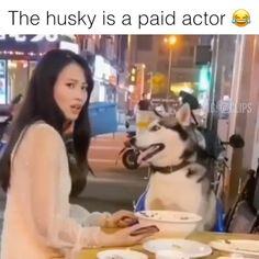 Super Funny Videos, Funny Short Videos, Funny Video Memes, Crazy Funny Memes, Really Funny Memes, Funny Animal Videos, Funny Animal Pictures, Haha Funny, Funny Cute