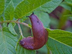 Sniglar ogillar bikarbonat. Foto: IBL Bildbyrå Dina, Inside Garden, Bra Hacks, Garden Weeds, Gardening Tips, Life Hacks, Animals, Pest Control, Blog