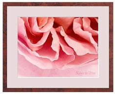 Rosa Rose als Kunstdruck oder Leinwandbild