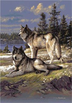 Wolves.                                                       …