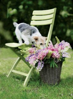 basket☽•✧•☆•✧•☾ ღ‿ ❀♥ ~ Fr 15th May 2015 ~ ❤♡༻ ☆༺ h❀ฬ to .•` ✿⊱╮ ♡☽•✧•☆•✧•☾