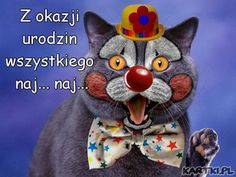 (Image) Have a great day and enjoy. Cat Birthday, Happy Birthday, Trippy Cat, Dead Man Walking, Raining Cats And Dogs, Cat Hat, Arts Ed, Here Kitty Kitty, Halloween