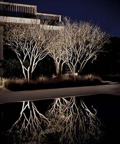 Low Voltage Landscape Lighting For Trees both How To Install Landscape Lighting Wire yet Led Landscape Lighting Discount; Landscape Gardening Services Near Me what Landscape Lighting Ideas Pictures Exterior Lighting, Outdoor Lighting, Lighting Ideas, Outdoor Lamps, Lighting Concepts, Plant Lighting, Backyard Lighting, Tree Lighting, Outdoor Ideas