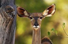 Эти смешные забавные животные (43 фото)