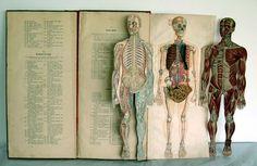 Strange Remains   This vintage Italian human anatomy atlas makes...