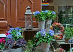 KUUNSÄTEESSÄ: Tukholman vanhan kaupungin kukkakaupat