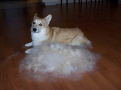 """The """"make your own corgi"""" kit arrived, and it really works!!!!:)"""
