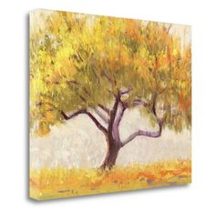 Tangletown Fine Art Apricot Tree Wall Art by Shirley Novak - WA605796-2218C