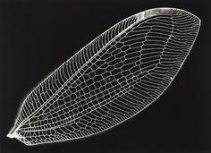 Lente Rasgado: Fossil of light - Kazuyuki Soeno