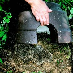 Hedgehogs and how to make a hedgehog house (Diy Garden Projects) Back Gardens, Outdoor Gardens, House Gardens, Allotment Gardening, Allotment Design, Allotment Ideas, Eco Garden, Summer Garden, Bug Hotel