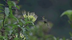 Nature Hummingbird