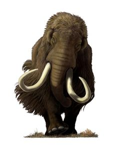 "This is one of two ""Mammoth"" digital paintings purchased from noted natural history artist Carl Buell."