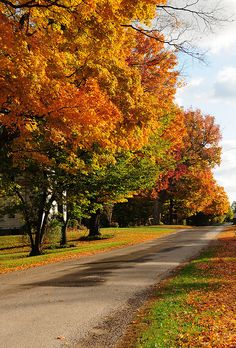 Fall in Ohio ... childhood memories of  kicking the leaves, and ironing them into wax paper