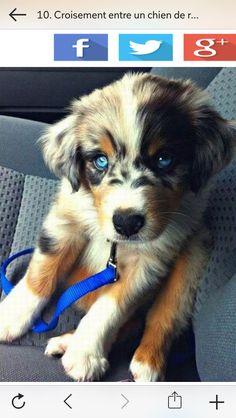 Ya pas un chien plus mignon :p