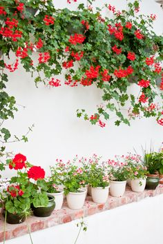 Lithéns trädgård