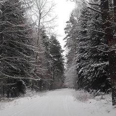 【weronikaan】さんのInstagramをピンしています。 《#Rosnowo #las #forest #숲 #森 #森林 #غابة #bosque #rừng #orman #zima #kış #冬季 #شتاء #invierno #mùađông #冬 #겨울 #śnieg #Snow #雪 #nieve #tuyết #雪 #눈 #zăpadă》