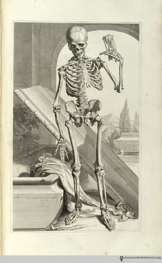 Courtesy of the New York Academy of Medicine.  Bidloo,  Govaert.   Anatomia humani corporis.   Amsterdam:  Joannis a Someren, 1685.