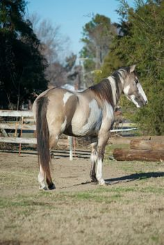 Wild Colonial Spanish Mustang | Discuss Any Colonial Spanish Mustang owners out here? at the Horse ...