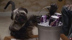 Mountain Dew's Puppy Baby Monkey Super Bowl Spot Is as Odd as It Is Addictive | Adweek
