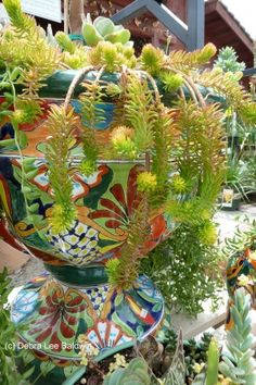 Succulents in Talavera pot. Plant World Nursery, Escondido, CA. Photo copyright Debra Lee Baldwin. Gardening Gone Wild