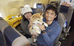 家族と一緒に旅行がしたい! 愛犬家の夢を叶えた日本初の企画『ワンワンフライト』とは? – grape [グレイプ] – 心に響く動画メディア