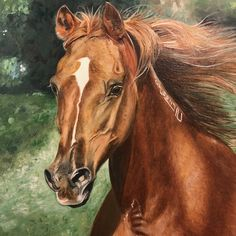 d30e72a6a912 12 Best •horses• images in 2019