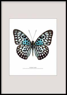 Prints med insekter