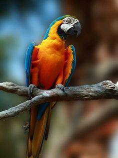 Macaw - Looks like a happy bird