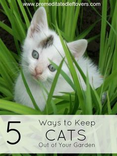 5 Ways to Keep Cats Out of the Garden - Cats can cause trouble in your garden in a number of ways. These safe and humane strategies will keep them out. Mulch Around Trees, Trees And Shrubs, Cat Garden, Garden Pests, Garden Fun, Organic Gardening, Gardening Tips, Vegetable Gardening, Keep Cats Away