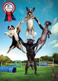 dog-training-school-pyramid-small-41226.jpg (600×840)