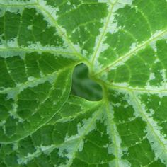Love this!  Hidden heart in nature