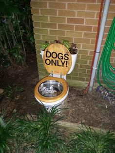 Toilet Planter/Water Bowl for My Dogs :) # diy dog park inside Dog Backyard, Dog Friendly Backyard, Dog Playground, Dog Toilet, Dog Water Bowls, Dog Yard, Dog Potty, Dog Rooms, Dog Daycare