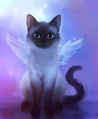 The Cat Fairy.ahhhh My TuXedo.we love you xox Angel cat Siamese Image Chat, Anime Animals, Cat Wallpaper, Rainbow Wallpaper, Cute Animal Drawings, Rainbow Bridge, Cat Drawing, Beautiful Cats, Animals Beautiful