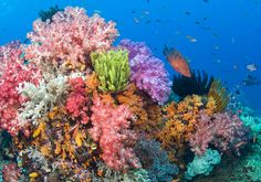 fish and coral in the sea