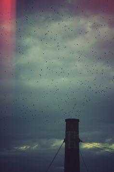 colony of swifts.