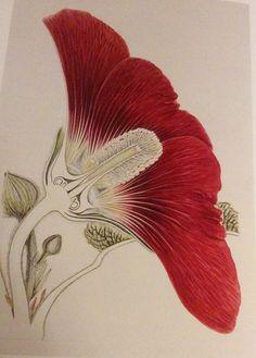 Arthur Harry Church  The Anatomy Of Flowers  1865-1937