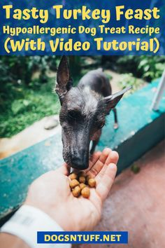 Thinking of what to do with the leftover turkey dinner? Why not turn it into homemade turkey dog treats so that your pooch will enjoy the Thanksgiving spirit too? #dogturkeyrecipes  #veggiedogrecipe #dogfood #dogrecipes Recipe To Make Dog Treats, Homemade Dog Treats, Dog Treat Recipes, Healthy Dog Treats, Dog Food Recipes, Pet Treats, Healthy Food, Healthy Recipes, Vegan Dog Food
