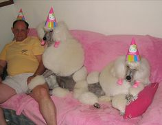 These partying poodles. | The 49 Most WTF Pictures Of People Posing With Animals