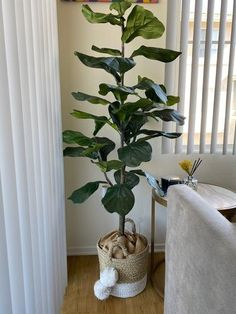 Gorgeous in green, this potted fiddle leaf tree by Valerie Parr Hill brings the look of nature into your home. Page 1 Potted Trees Patio, Artificial Indoor Trees, Best Indoor Trees, Fake Plants Decor, Faux Plants, Plant Decor, Indoor Plants, Fiddle Leaf Tree, Fig Leaf Tree