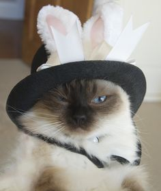 Jemma's easter bonnet - another one for George to giggle over!