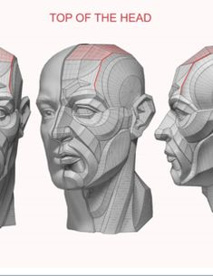 Head & Neck Anatomy book - MOUTH - Estimated completion of this book is… Facial Anatomy, Head Anatomy, Human Anatomy Drawing, Anatomy Poses, Anatomy Study, Body Anatomy, Anatomy Art, Anatomy Reference, Drawing Reference