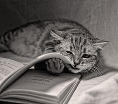 cat & book