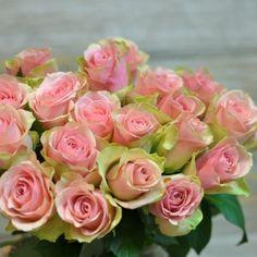 Trandafiri Roz cu livrare în Moldova Rose, Plant, Pink, Roses, Pink Roses