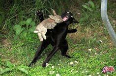 El conejo asesino