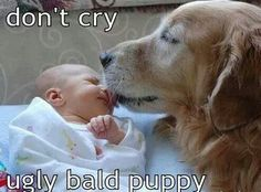 "Don""t cry ugly bald puppy"