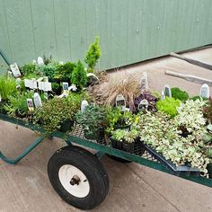 "Select small-scale plants ~ on this site, she suggests several ""for their slower growing habits, Lilliputian forms, and copycat looks of larger plants. Envision Irish moss as turf, hens-and-chicks as..."