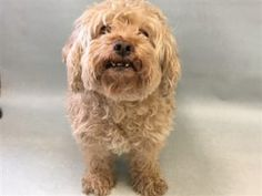 SUPER URGENT 3/26/18 Honey is an older female spayed medium size dog. She has been with the owner since a puppy. Owner is surrendering due to no time. Owner reported Honey urinating more frequently. The last time Honey saw a vet was back in November for annual checkup.